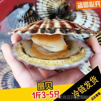 大连大扇贝鲜活冷冻即食水产 新鲜贝类烧烤海鲜食材 1斤5个左右