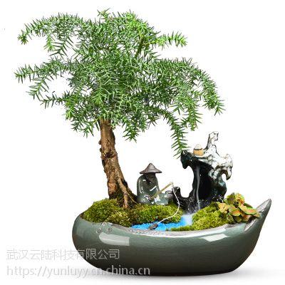 武汉公司盆栽盆景出租销售,办公室植物花卉租赁养护