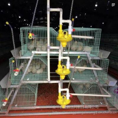 鸡笼 静电喷塑肉鸡笼育雏笼三层阶梯小鸡笼养殖设备
