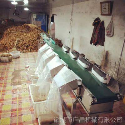 山东广昌皮带式八级人参重量分选机 自动分级机