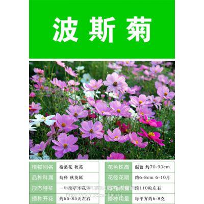 花带花海种子怎么配比田园综合体美丽乡村种什么花卉