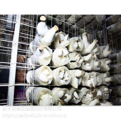 蘑菇养殖网架 浸塑蘑菇网片 蘑菇网生产厂家