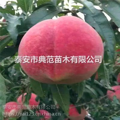 晚熟桃树苗品种介绍 晚熟桃树苗价格
