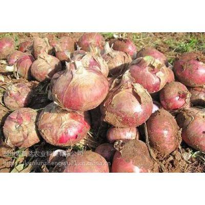 根茎块作物专用——根茎块膨大素,膨果增产