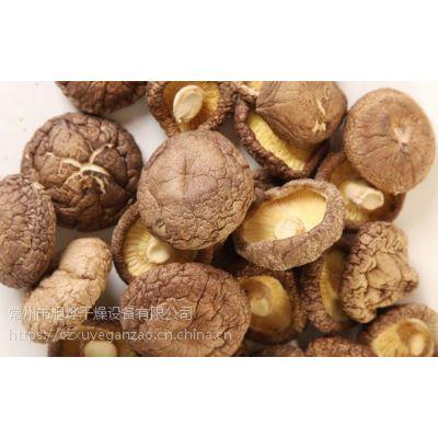 供应优质高效香菇多种可用专用立式不锈钢热风循环烘箱