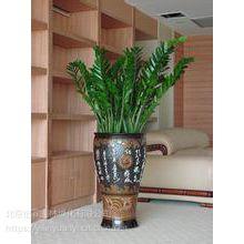 办公室花卉销售北京花卉销售公司