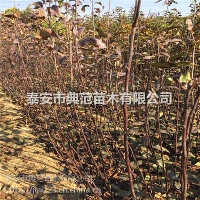 梨树亩产量多少斤 梨树一亩地可以产多少斤