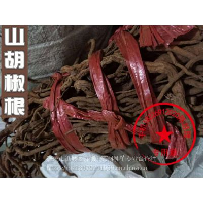 中药材野山胡椒根功效 山胡椒根批发多少钱一斤
