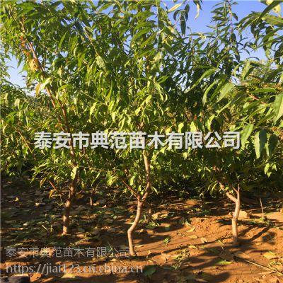 3公分桃树 地径3公分桃树出售