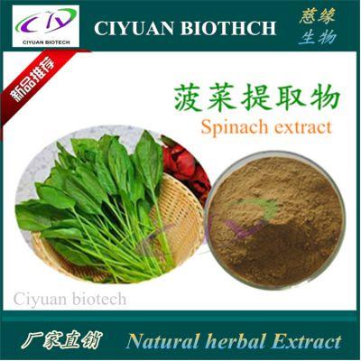 菠菜提取物10:1 Spinach Extract 慈缘生物 品质保证