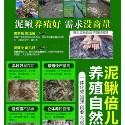 湖北振农生态农业发展公司振农9号泥鳅养殖泥鳅养殖技术及成本