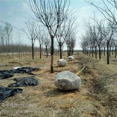 苗木种植农场抢购树根网,包土球网,树根移植网