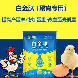 肉鸭吃什么长得快 肉鸭催肥方法 蛋鸭吃什么下蛋多 白金肽