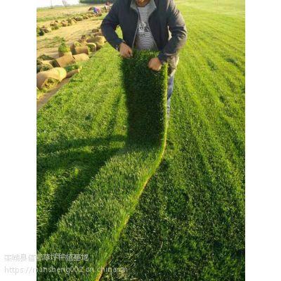 寿命长的绿化草坪|黑麦草草籽供应
