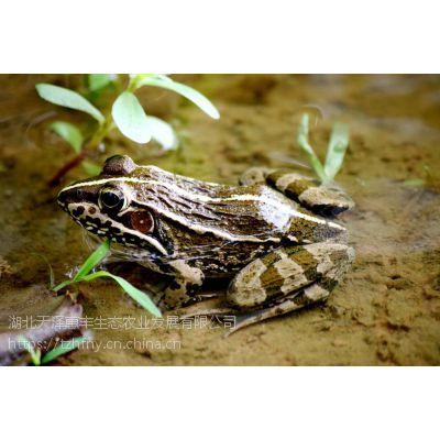 黑斑蛙养殖的成本核算