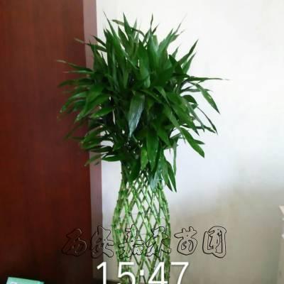 西安室内前台绿植租摆价格是多少