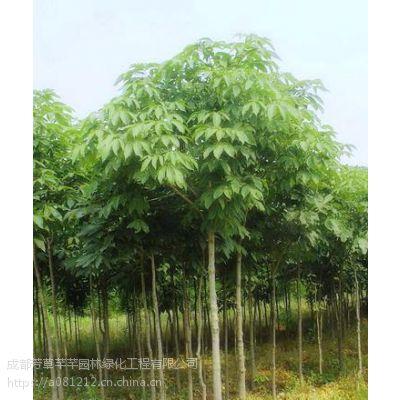 全国大量批发七叶树,及其他草坪苗木等品种齐全