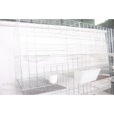 低价热销16位鸽子笼 养殖用配件 镀锌网片 现货直销