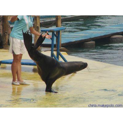 海洋展定制海狮表演资源策划租赁公司