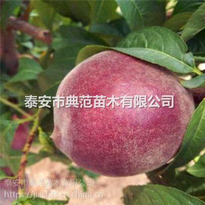 桃树新品种 桃树苗什么品种好
