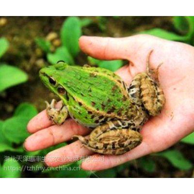 天泽惠丰青蛙养殖的生存环境是怎样的呢?