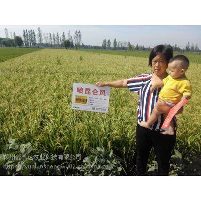 水稻增产套餐昆仑风提高出米率水稻高产叶面肥