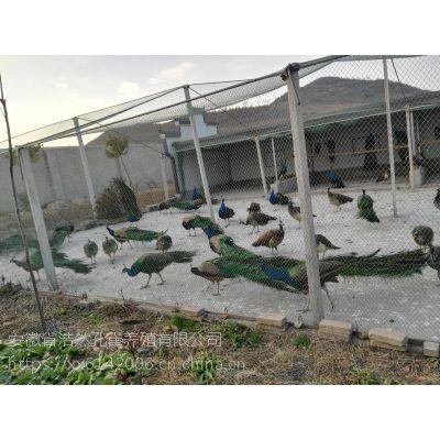 专业化孔雀养殖企业提供一切证件及一切服务