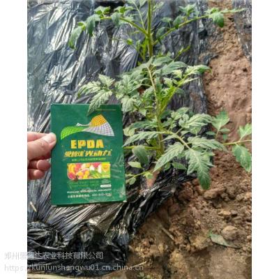 黄瓜膨果光碳肥厂家 抗病抗早衰氨基酸水溶肥