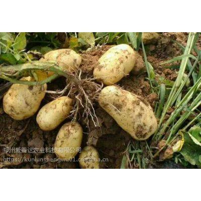 马铃薯控旺膨大叶面肥小胖墩让马铃薯高产种植更轻松